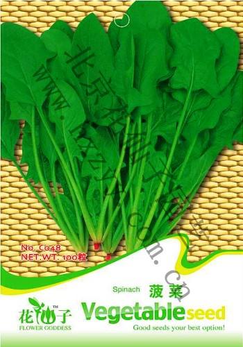 菠菜叶片下表皮细胞结构图片