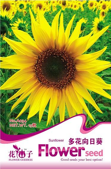 产品展示 向日葵种子礼品卡&种植组合 > 多花向日葵  产品名称:多花