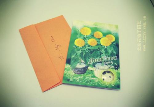 【小熊维尼---向日葵种子礼品卡种子】最新报价-花仙子园艺1公里等於幾公尺